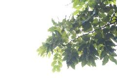 Rama del árbol con textura en las hojas alrededor con o efectuado imagenes de archivo
