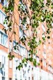 Rama del árbol de abedul verde y de la casa urbana Fotografía de archivo