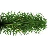 Rama del árbol de navidad Imagen de archivo libre de regalías