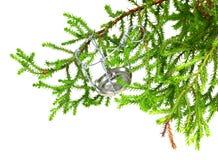Rama del árbol de navidad casero decorativo con muselet del campeón Fotografía de archivo