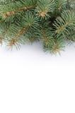 Rama del árbol de navidad sobre el fondo blanco fotos de archivo