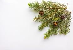Rama del árbol de navidad y de conos en el fondo blanco Foto de archivo libre de regalías