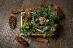 Rama del árbol de pino con las agujas y el cono Fotografía de archivo libre de regalías