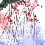 Rama del árbol de Sakura del flor Imagen de archivo