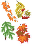 Rama del árbol del otoño aislada en el fondo blanco Foto de archivo