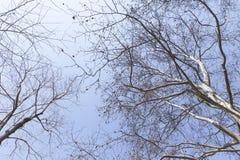 Rama del árbol en cielo Foto de archivo libre de regalías