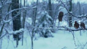 Rama del árbol en el bosque cubierto con hielo y nieve almacen de video