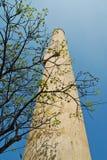 Rama del árbol entre pila Imagen de archivo