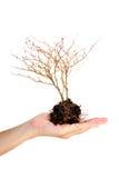 Rama del árbol muerto en la mano en el fondo blanco imágenes de archivo libres de regalías