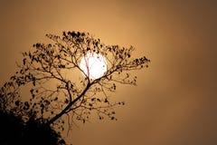 Rama del árbol y de la puesta del sol Imagen de archivo