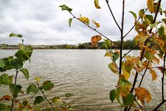 Rama del abedul con las hojas del amarillo y del lago en fondo Bosque del otoño por el lago Imagen de archivo