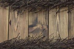 Rama del abedul en fondo de madera Fotos de archivo