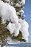 Rama del abeto con un casquillo de la nieve Fotografía de archivo libre de regalías