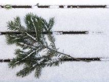 Rama del abeto de douglas en la nieve que hace frente a la izquierda Imagenes de archivo