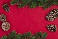 Rama del abeto de la Navidad Fotos de archivo