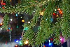 Rama del abeto en el fondo de luces coloreadas Foto de archivo libre de regalías
