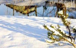 Rama del abeto en la nieve Foto de archivo libre de regalías