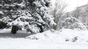 Rama del abeto del invierno con escarcha y nevadas metrajes