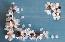 Rama del albaricoque con las flores Imagenes de archivo