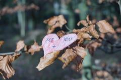Rama del amor Foto de archivo libre de regalías
