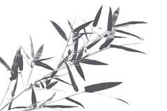 Rama del bambú negro Fotografía de archivo libre de regalías