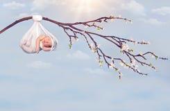 Rama del bebé de la ejecución Foto de archivo libre de regalías