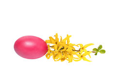 Rama del codeso con un huevo de Pascua Fotos de archivo libres de regalías