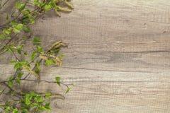 Rama del flor del árbol de abedul en el fondo de madera con el balneario de la copia Foto de archivo libre de regalías