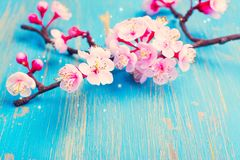 Rama del flor Sakura Primavera o concepto del día de fiesta de pascua Imagenes de archivo