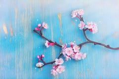 Rama del flor Sakura Primavera o concepto del día de fiesta de pascua Fotos de archivo libres de regalías
