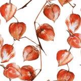 Rama del fondo con las frutas del physalis Modelo inconsútil Ilustración de la acuarela libre illustration