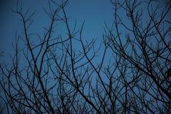 Rama del fondo de la silueta del árbol Imágenes de archivo libres de regalías