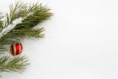 Rama del pino con una esfera roja del Año Nuevo Imagen de archivo libre de regalías