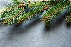 Rama del pino de la Navidad en fondo de la pizarra Fotos de archivo libres de regalías