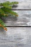Rama del pino de la Navidad en los tableros de madera Fotografía de archivo libre de regalías