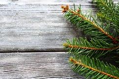 Rama del pino de la Navidad en los tableros de madera grises Fotografía de archivo libre de regalías