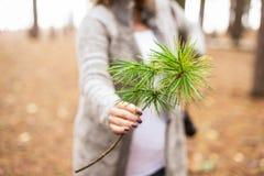 Rama del pino de la tenencia de la mujer en bosque foto de archivo libre de regalías