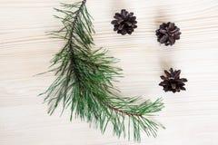 Rama del pino y conos del pino Imagen de archivo libre de regalías
