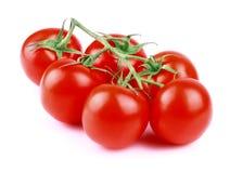 Rama del tomate en blanco. Imágenes de archivo libres de regalías