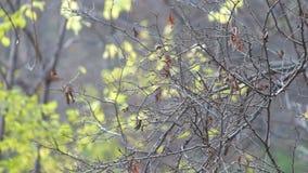 Rama desnuda con algunas hojas secas que se sacuden levemente en el viento almacen de video