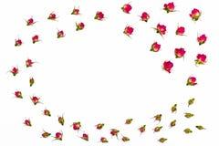 Rama dla teksta od wysuszonych kwiatów wzrastał Kwitnie skład Obrazy Stock