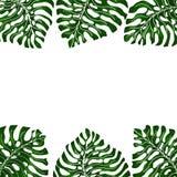 Rama dla teksta z białym tła i zieleni egzotem opuszcza monsteras wiesza od dwa stron Pomysł dla plakata, pocztówka, ulotka ilustracja wektor