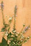 Rama dzicy kwiaty kłama na lekkiej drewnianej powierzchni obrazy stock