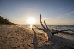 Rama en la playa Imagenes de archivo