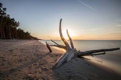 Rama en la playa Imágenes de archivo libres de regalías