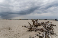 Rama en la playa Foto de archivo libre de regalías