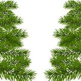 Rama enorme verde de la picea con los dos lados Ramas del abeto en el ejemplo blanco Fotos de archivo