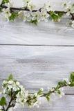 Rama floreciente de la primavera Imágenes de archivo libres de regalías