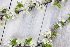 Rama floreciente de la primavera Imagen de archivo