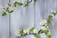Rama floreciente de la primavera Fotos de archivo libres de regalías